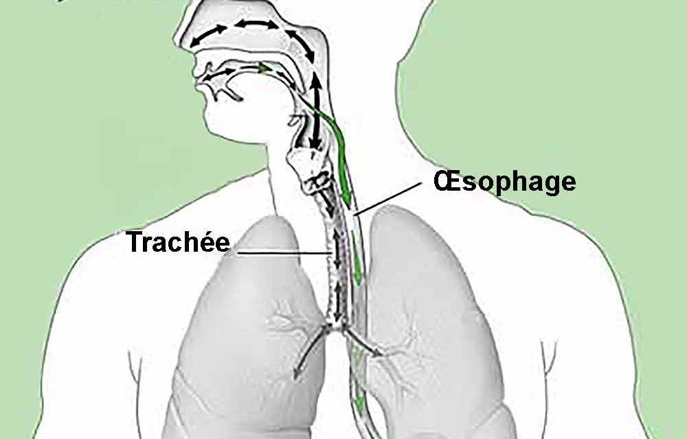 Quelle est la difference entre l'œsophage et la trachée