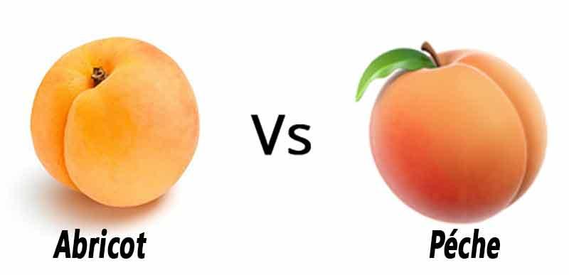 Quelle est la différence entre la pêche et l'abricot