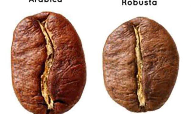 Quelle est la différence entre le café Arabica et Robusta?