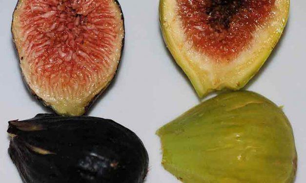 Quelle est la différence entre la figue verte et la figue noire