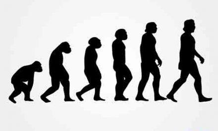 Quelle est la différence entre l'anthropologie et l'histoire