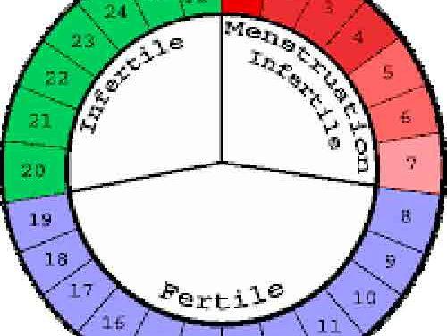Quelle est la différence entre l'ovulation et la menstruation