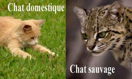 Quelle est la différence entre les animaux domestiques et sauvages