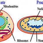 Quelle est la différence entre les cellules procaryotes et eucaryotes
